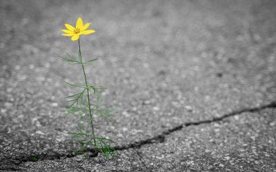 Onko toivon antaminen hoitovirhe?