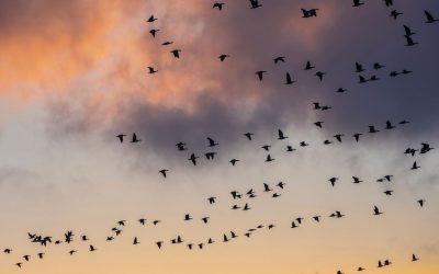 Tämän meille opettavat linnut